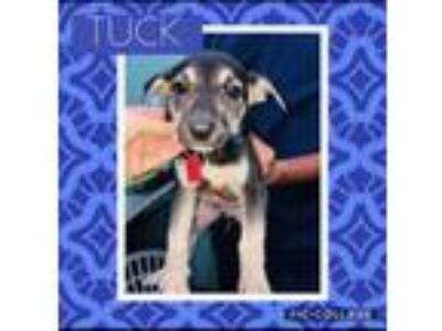 Adopt Tuck a German Shepherd Dog, Labrador Retriever