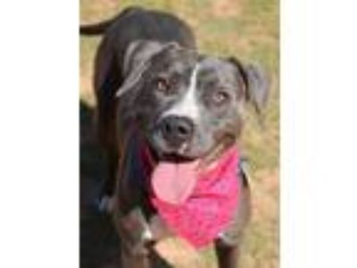 Adopt Lacey a Mixed Breed