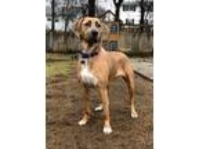 Adopt Camilla a Hound (Unknown Type) / Mixed dog in Barrington, RI (25329404)