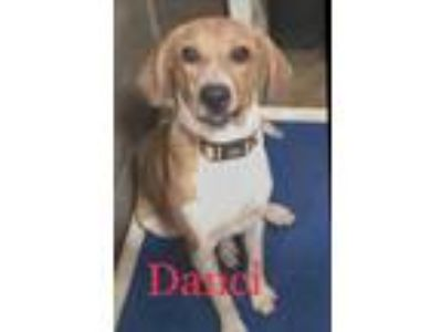 Craigslist - Dogs for Adoption Classified Ads in Miami
