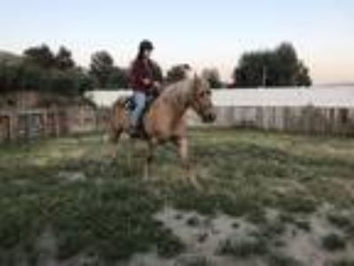 TW Palomino mare for sale