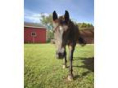 Adopt Junior a Pony