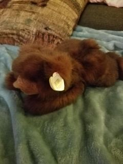 PLUSHED BROWN BEAR, EXCELLENT CONDITION, SMOKE FREE HOUSE