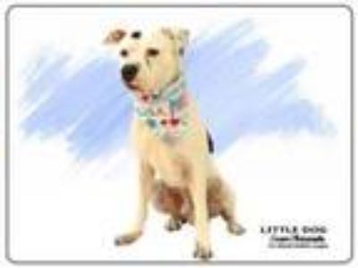 Adopt LITTLE DOG a Mixed Breed