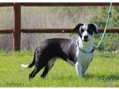 Adopt Julia a Border Collie
