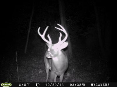 alabama whitetail deer rut