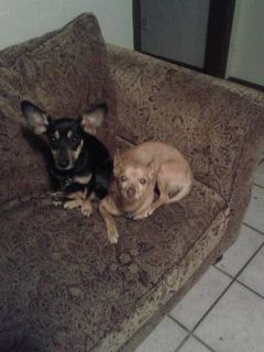- $100 Needing short term place for 2-3 weeks ASAP for me and 2 small dogs (near Quail Springs)