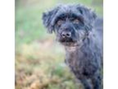 Adopt Gene a Terrier, Mixed Breed