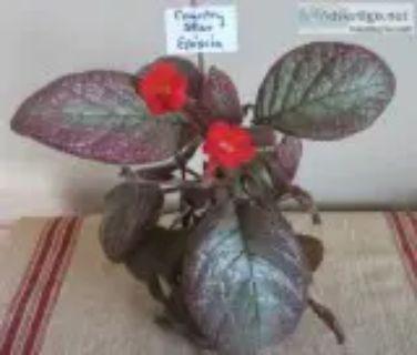 Houseplants and Outdoor plants Sale