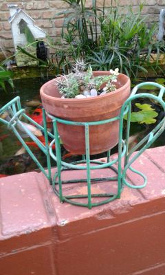 Decorative watering can with potted succulents