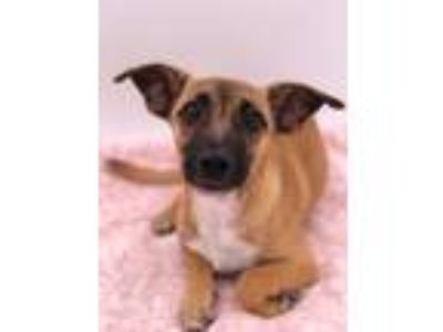 Adopt Lulu a Dachshund / Terrier (Unknown Type, Small) / Mixed dog in Thousand