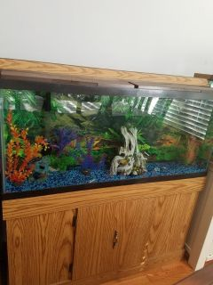 55 gallon tank w/fish