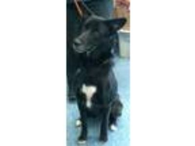 Adopt 157913 a Black Border Collie / Mixed dog in Bakersfield, CA (23146331)