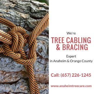 Tree Cabling and Bracing Orange County
