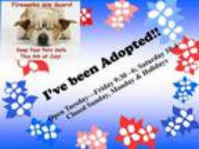 Adopt A497344 a Terrier, Mixed Breed