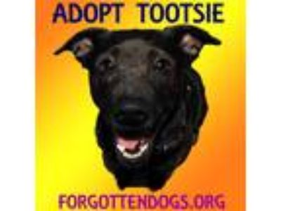 Adopt Tootsie a Brindle Basenji / Mountain Cur / Mixed dog in Houston