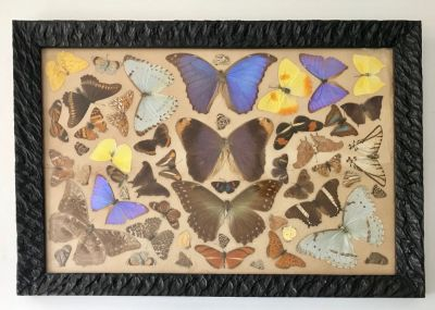Vintage Pressed Butterfly Collage Mid Century Art
