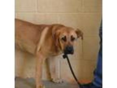 Adopt Andre 3000 a Tan/Yellow/Fawn Shepherd (Unknown Type) dog in East