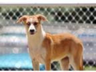 Adopt Magenta a Tan/Yellow/Fawn Mixed Breed (Medium) / Mixed dog in Charleston