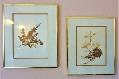 Two Nature Art Wall Pictures