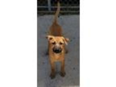 Adopt Daisy a Shepherd (Unknown Type) / Mixed dog in Atlantic City