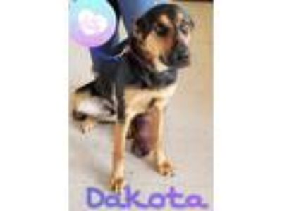 Adopt Dakota a Black - with Tan, Yellow or Fawn German Shepherd Dog / Mixed dog