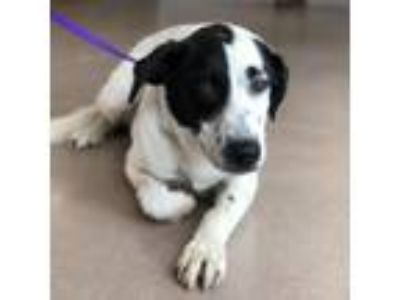 Adopt MARTIN a Border Collie