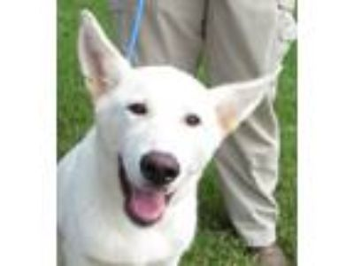 Adopt Casper a German Shepherd Dog