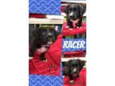 Adopt Racer a Mixed Breed
