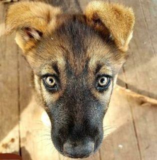 Puppies - Jacksonville Classifieds - Claz org