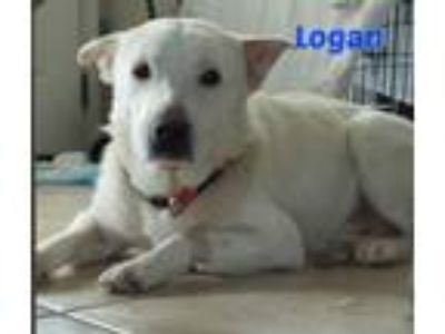 Adopt Logan a Border Collie