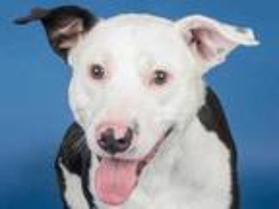 Adopt Loki a Black Mixed Breed (Large) / Mixed dog in Longmont, CO (25036769)