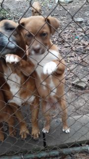 2 male puppies in need of furever home.