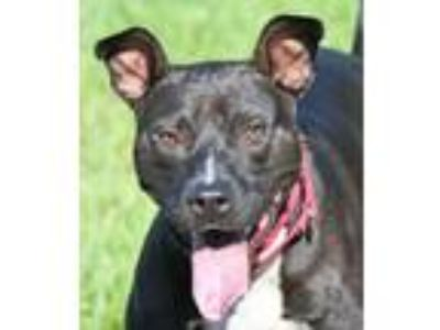 Adopt CODY a Mixed Breed