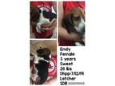 Adopt Emily a Beagle / Mixed dog in Homer Glen, IL (25921150)