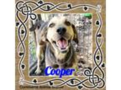 Adopt Cooper a Coonhound / Hound (Unknown Type) / Mixed dog in Commerce