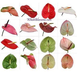 Wholesale Flowers Online - Innumerable Varieties