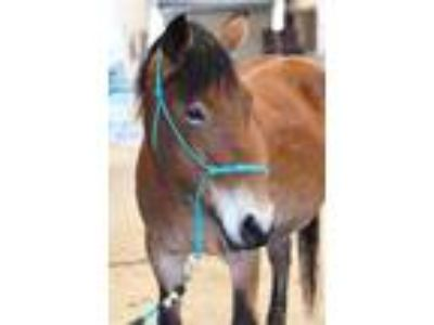 Adopt Flossy a Mustang / Mixed horse in McKinney, TX (23886036)