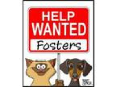 Adopt FOSTERS NEEDED!! a Labrador Retriever / Mixed dog in Orlando, FL (8429404)
