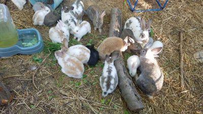 7 week and 9 week old bunnies