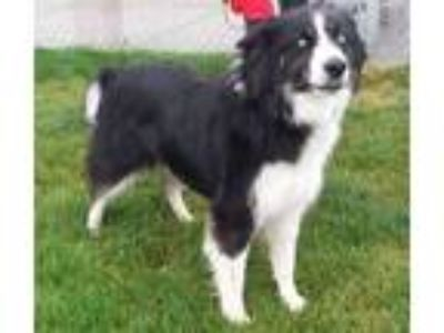 Adopt Raney a Border Collie