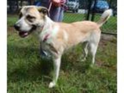 Adopt 32338A Winnie a White Collie / Mixed dog in North Charleston
