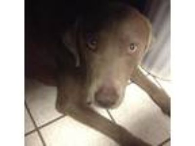 Adopt Bliss a Tan/Yellow/Fawn Mixed Breed (Large) / Mixed dog in Charleston