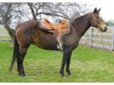 Buckskin RanchTrail Riding Mare