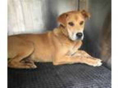 Adopt Wanda a Shepherd (Unknown Type) / Mixed dog in Birmingham, AL (25836823)