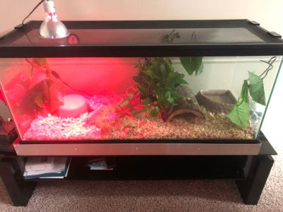 Reptile and snake tanks