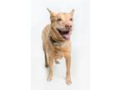 Adopt Chutney a Mixed Breed