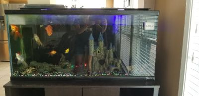 50 Gal Fish tank with a variety of fish