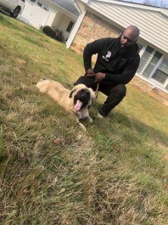 Caucasian Shepherd Dog PUPPY FOR SALE ADN-101655 - caucasian ovcharka 6mths