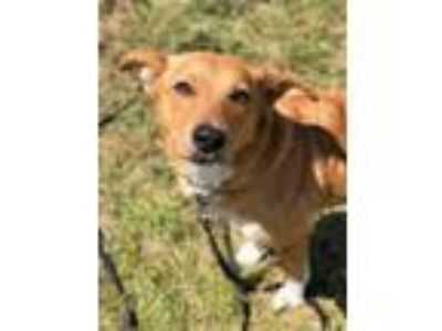 Adopt Rosie a Tan/Yellow/Fawn Mixed Breed (Medium) / Mixed dog in Wellsville